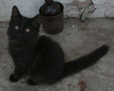 Male kitten is waiting for his new home