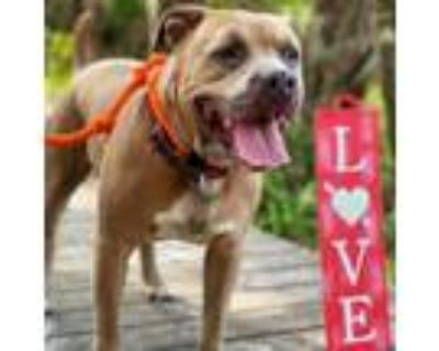 Adopt Elliot a Mixed Breed