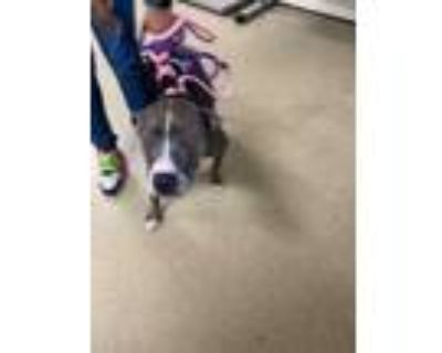 Adopt JADA a Brown/Chocolate American Pit Bull Terrier / Mixed dog in Fort