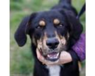 Adopt Terrence a Black Hound (Unknown Type) / Shepherd (Unknown Type) / Mixed