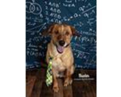 Buster Aka Aspen, Labrador Retriever For Adoption In Littleton, Colorado