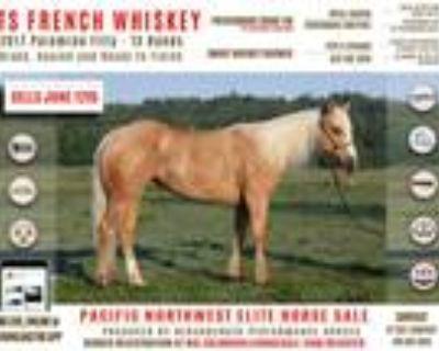 TS French Whiskey 2017 Futurity Prospect