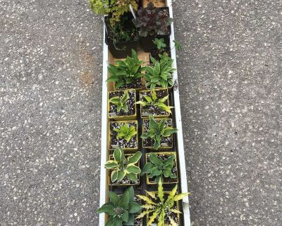 Does not include wooden box- Perennial Miniature Plants