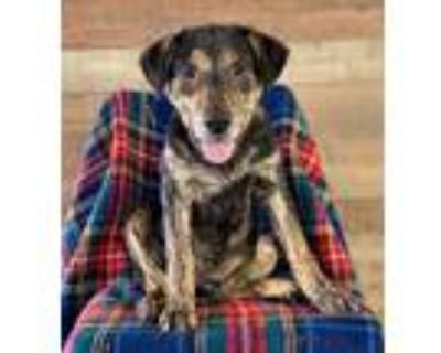 Adopt Barry a Mixed Breed (Medium) / Mixed dog in Park City, UT (30659293)