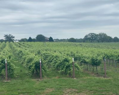 A Hill Country Vineyard Sale