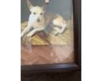 Adopt Neo a Brown/Chocolate - with Tan Rat Terrier / Mixed dog in Carmel