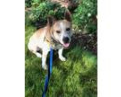 Craigslist - Dogs for Sale or Adoption Classifieds in ...