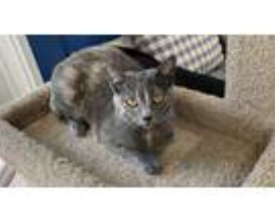 Adopt Tilly a Tortoiseshell Domestic Shorthair / Mixed cat in Los Angeles