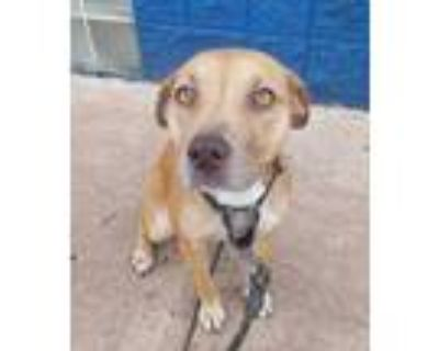 Adopt Turtle Dove* a Tan/Yellow/Fawn Mixed Breed (Medium) / Mixed dog in