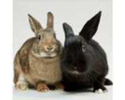 Adopt La Bamba / Macarena a Bunny Rabbit