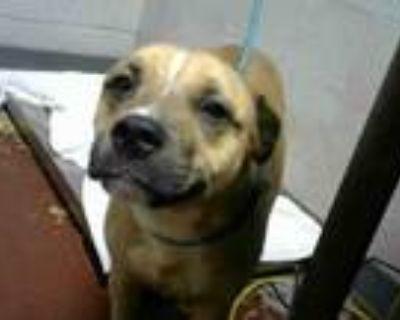Adopt DUMPLING SOUP a Pit Bull Terrier