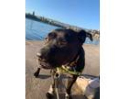Adopt Gracie a Black - with White Terrier (Unknown Type, Medium) / Mixed dog in
