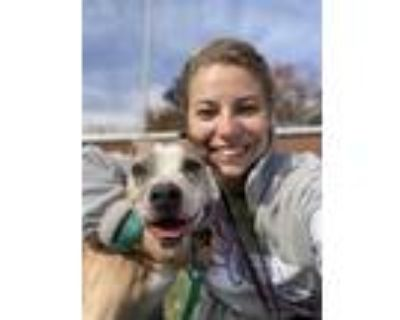 Adopt Agnes(in foster) a Tan/Yellow/Fawn American Pit Bull Terrier / Mixed dog