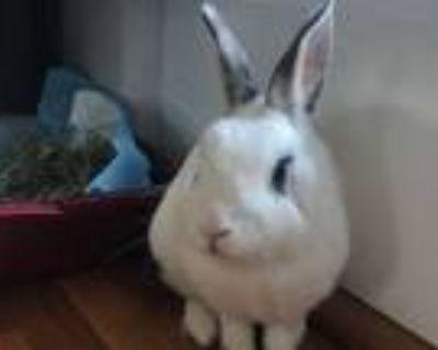 Adopt EXTRA a Bunny Rabbit