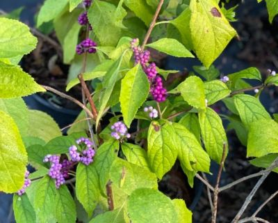 August  Plants For Sale/ Open Only Fri, Sat, & Sunday