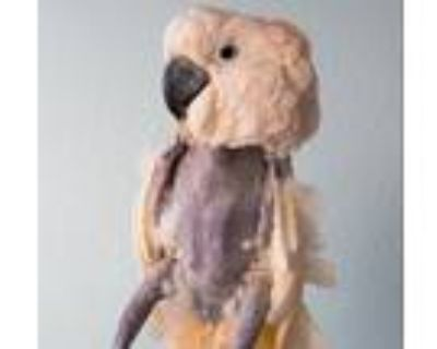 Adopt Corky a Cockatoo
