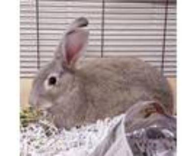Adopt Miracle a Bunny Rabbit