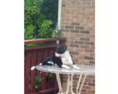Adopt MAX a Black - with White Boxer / Dalmatian / Mixed dog in Lilburn
