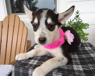 Private Breeders Check us out at: www.pups4people.com Check out our Low Prices on...