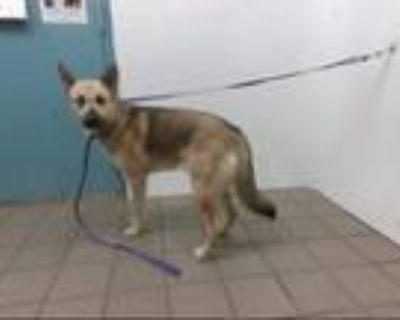 Adopt EZEKIEL a German Shepherd Dog, Husky