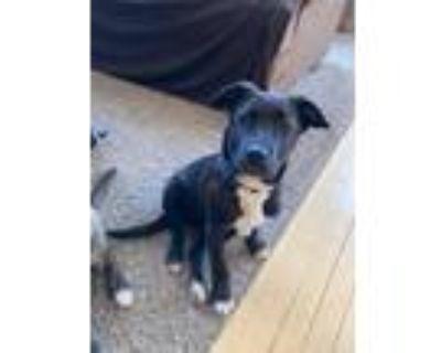 Adopt Tulip a Mixed Breed (Medium) / Mixed dog in Park City, UT (30604232)