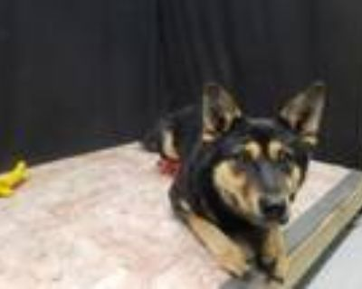 Adopt LUCY a German Shepherd Dog, Mixed Breed