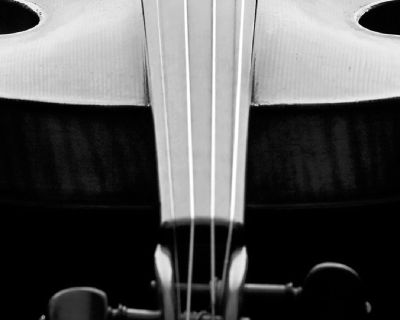 Violin, Viola, Cello, Bass and Bow Shop