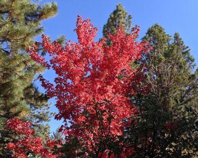 Come enjoy our 4 Season Wonderland in the Big Bear Mountains!!! - Moonridge
