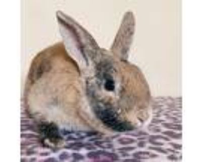 Patty, Other/unknown For Adoption In Richmond, California