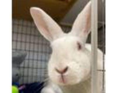 Adopt Pearl a Bunny Rabbit