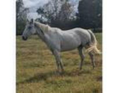 Trail Horse- sale pending
