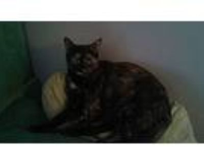 Sprinkles, Domestic Shorthair For Adoption In Los Angeles, California