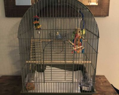 Two Fancy Parakeets, bird cage, 3 toys, 2 perches, 2 feeding containers, 1 water container