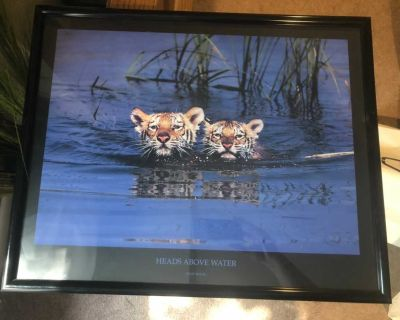 Framed baby tiger picture