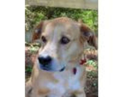 Adopt 5226 BJ a Labrador Retriever, German Shepherd Dog