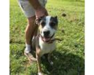 Adopt Rolo (LF-Fostered in TN) a Hound, Terrier