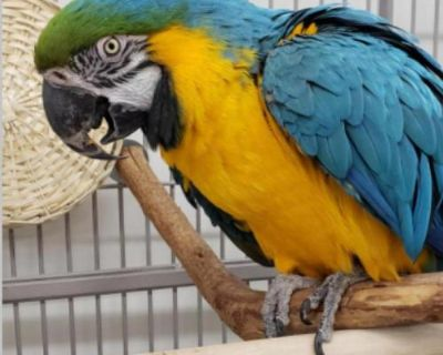 Macaw named Tallie available for adoption