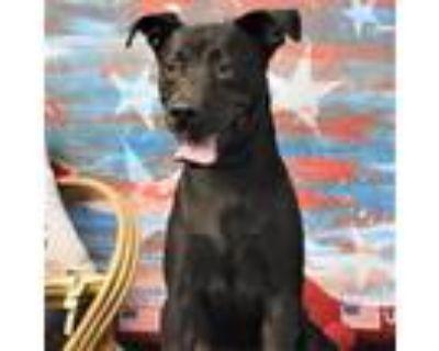 Adopt Keenan a Black Labrador Retriever / Mixed dog in Yuma, AZ (31862636)