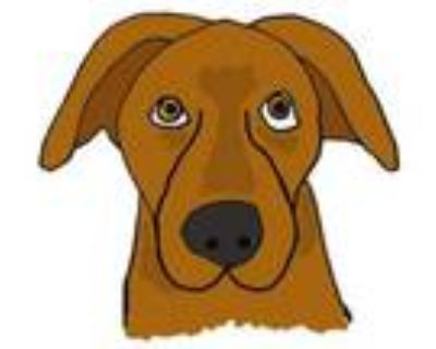Adopt BIG DOG FOSTERS NEEDED! a Mixed Breed