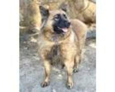 Adopt Gladys/Faith a Black Shepherd (Unknown Type) / Mixed dog in Palm Springs