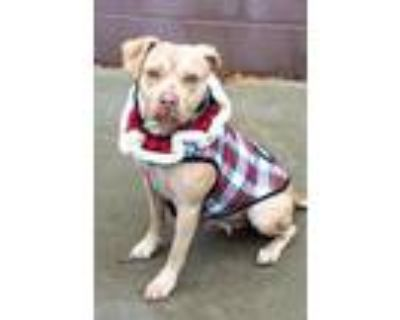 Adopt Roxie Pops a Tan/Yellow/Fawn Mixed Breed (Large) / Mixed dog in Chamblee