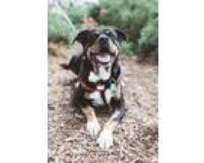 Adopt Baby in Colorado a Rottweiler