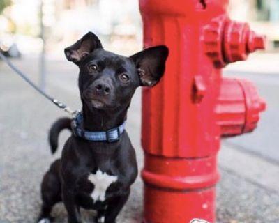 Doggie Daycare & Pet Grooming DTLA | BoneSweetBone