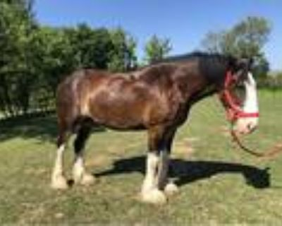 Bombproof Trail Horse