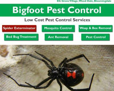 Spider exterminator Hoffman Estates