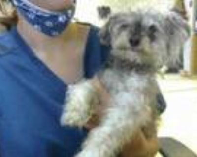 Adopt JO a Poodle, Mixed Breed