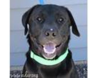 Sparky, Retriever (unknown Type) For Adoption In Cheyenne, Wyoming