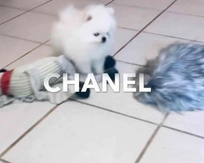 UPDATE  : CHANEL HAS BEEN  PLACED