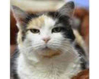Edith, Domestic Shorthair For Adoption In Cumming, Georgia
