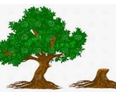 TREES N MORE